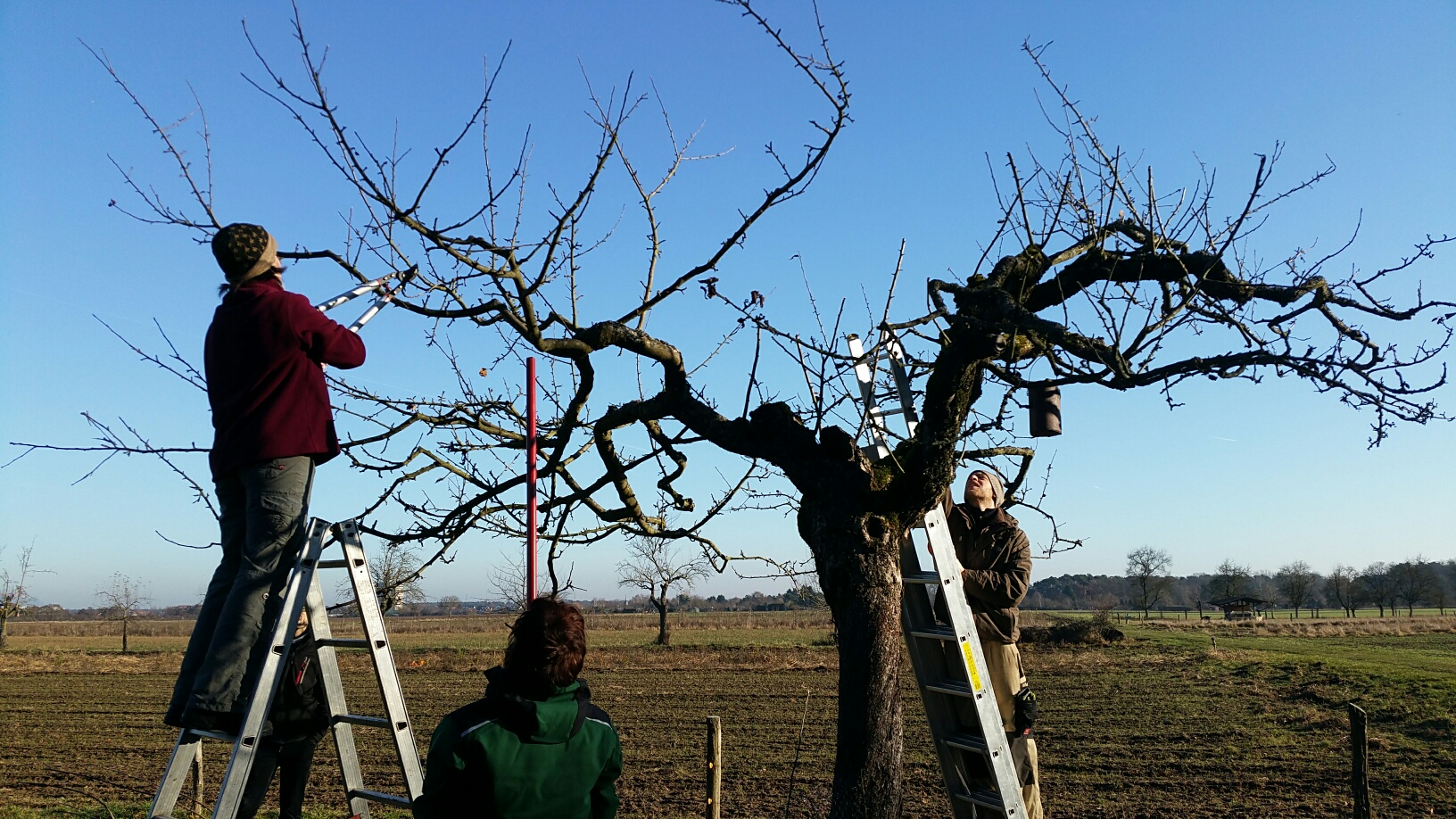 Obstbaumschnitt im Februar