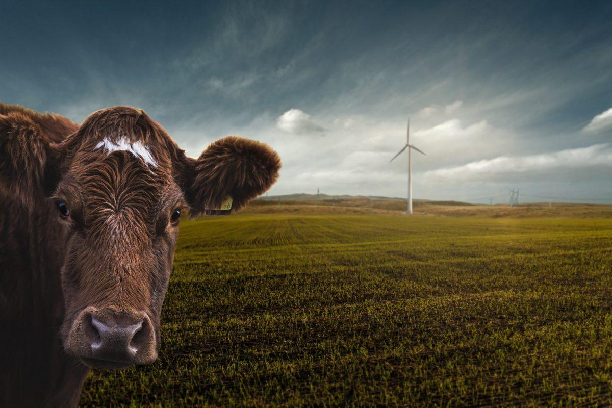 11. September: Klimaschutz geht fleischlos besser – Experten, Kurzfilme und vegane Kostproben