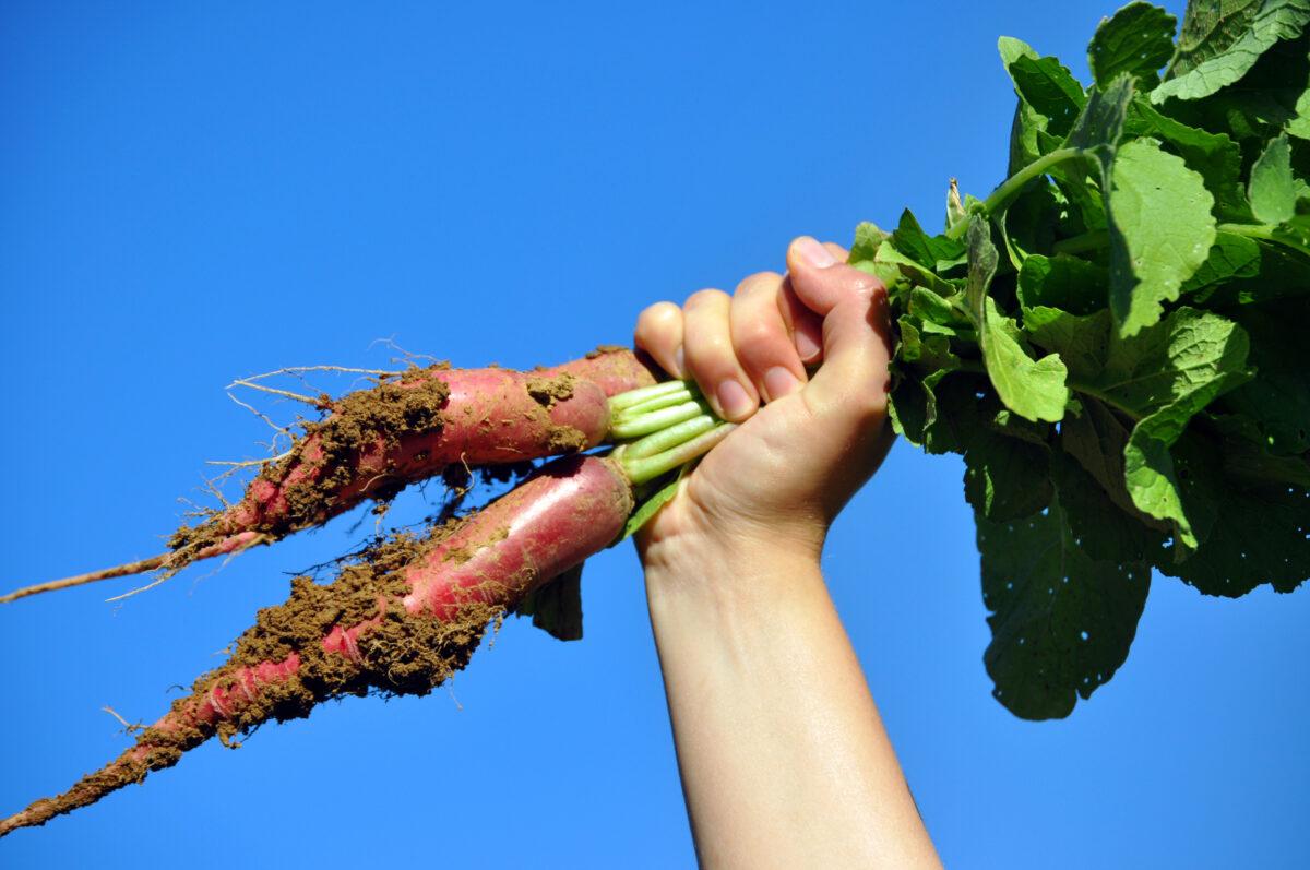 Gemüsegärtner_in gesucht!